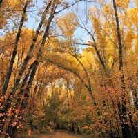 Осенний пейзаж, Усть-Каменогорск