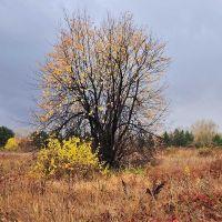 пейзаж с деревои или готовимся к зиме (вертикальная версия), Усть-Каменогорск