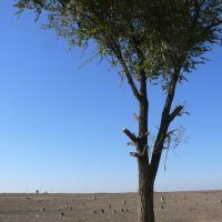 Вяз - важный энергоресурс.Средний рост мужчин в Казахстане 168см, Атырау