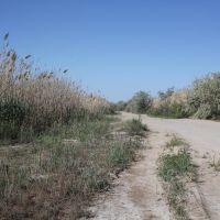 дорога в дельте Урала, Балыкши