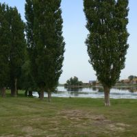Ganjushkin. Poplars on coast of the river., Ганюшкино
