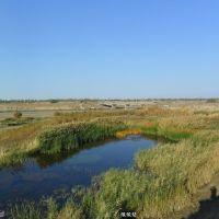 Вид  от  старицы  на  мост  и  Новотроицкое(Толе Би)., Брлик