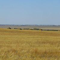 поле, Георгиевка