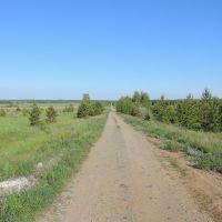 Позиционная дорога, Георгиевка