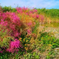 Балхашська прибережна рослинність, Чиганак