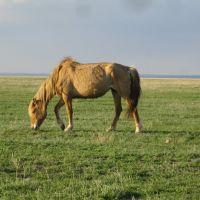 Лошадь в степи, Жарык