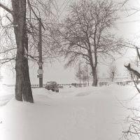 Деревья на Набережной, Никольский