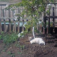 кошка Маня и яблоня, Абай