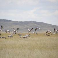 Птицы, Каркаралинск