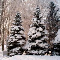 Зимушка-зима (01.2009), Красноармейск