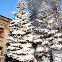 Институт зимой (01.2009), Красноармейск