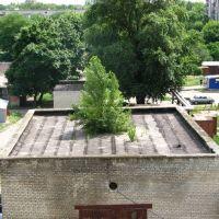 Дерево на крыше, Красноармейск