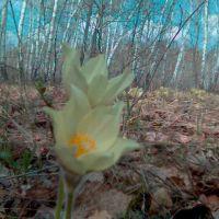 Spring!, Ленинградское