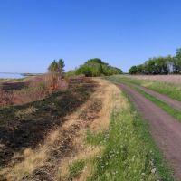 Дорога к озеру, Камышное