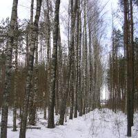 Бярэзьнік, Комсомолец