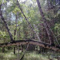 Лес возле Бозбека, Кушмурун