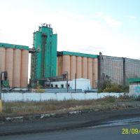 Койбагорский элеватор, Кушмурун