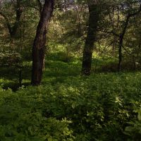 полянка, дерева, роща Баума, Орджоникидзе