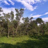 деревья, небо, роща Баума, Орджоникидзе