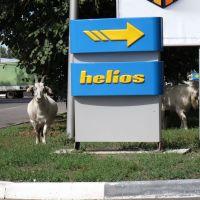 Helios, Орджоникидзе