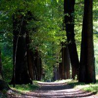 Baums Grove, oak alley, Орджоникидзе