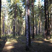 лес, Семиозерное