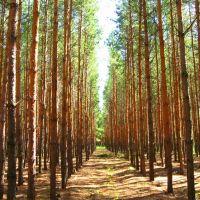 Лесопосадка возле с. Речное, Семиозерное