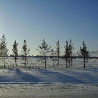 морозный день, Лебяжье