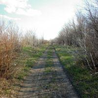 Дорога на дачи, Сергеевка