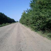 Плохая дорога, Соколовка