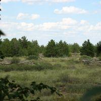 Forest, Бельагаш
