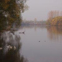 Медвенский пруд, Большая Владимировка