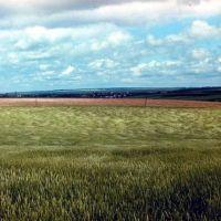 пшеничное поле, Большая Владимировка