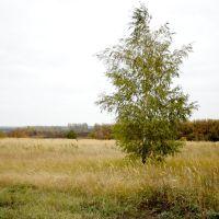 в поле, Большая Владимировка