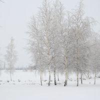 роща, Большая Владимировка