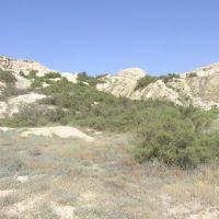 Потемнения на космоснимке могут оказаться растительностью, 2006г., Жарма