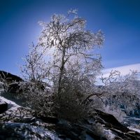 Изморозь//Snow on a tree, Семипалатинск