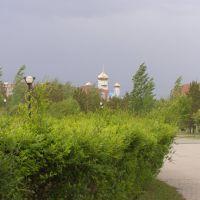 Молодые деревья в Президентском парке / Young trees in the Presidential Park, Таскескен