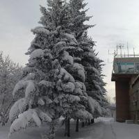 Ёлки возле вышки, Кировский