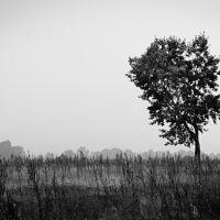 The Tree, Кировский