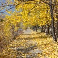 Autumn in Tekeli / Осень в Текели, Текели