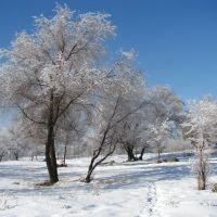 В  нашем парке зима ..., Текели