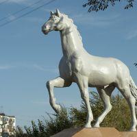 Конь, Аксу