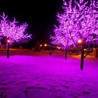 Розовые деревья, Аксу