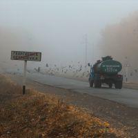 Flock of Crows Стая ворон, Алексеевка