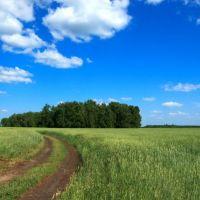 Wheat fields, Жалтыр