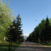 ул. К.Сатпаева (старое ул. Ленина), Кокшетау