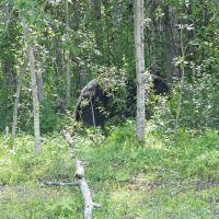 Der erste und einzige Bär, Гранд-Праири