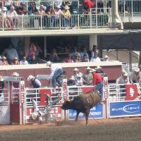 Calgary Stampede - Thrown bull rider, Калгари