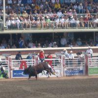 Calgary Stampede - Charging Bull, Калгари